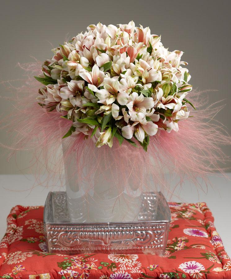 Alstroemeria fiore del mese di Febbraio