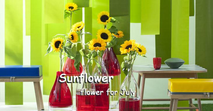 Sunflower flower for July