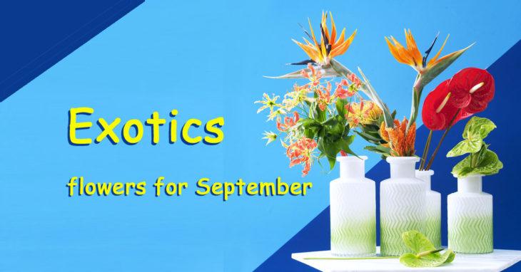 Exotics flowers for September