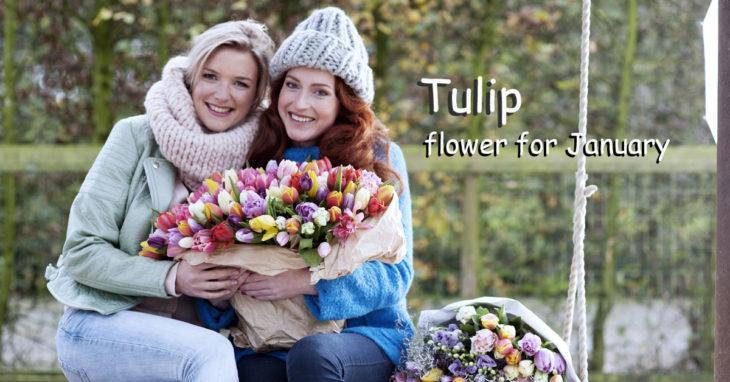 Tulip flower for January
