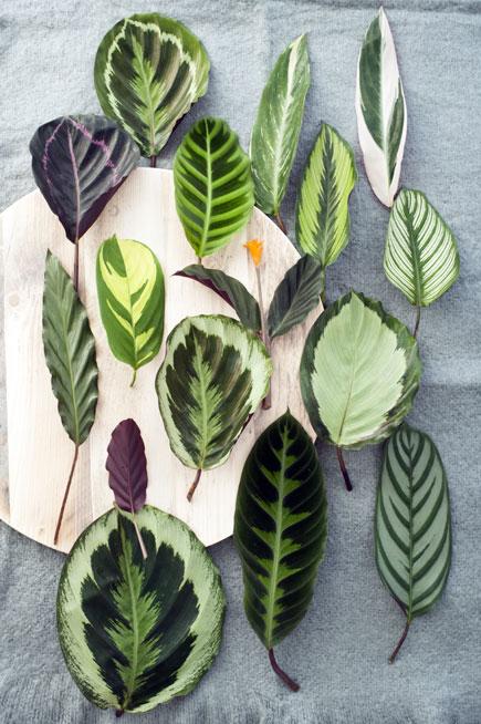 foglie per composizioni floreali