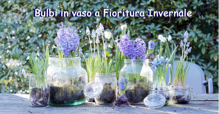 Bulbi in vaso pianta da giardino di febbraio
