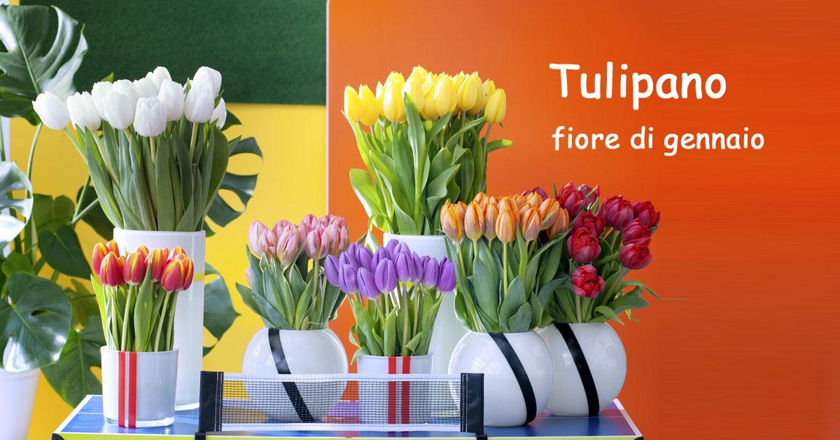 Tulipano fiore del mese di gennaio for Lilium in vaso