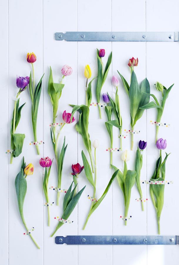 Tulipano fiore del mese di gennaio