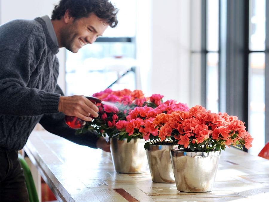Come acquistare fiori recisi foglie e fogliami dal grossista