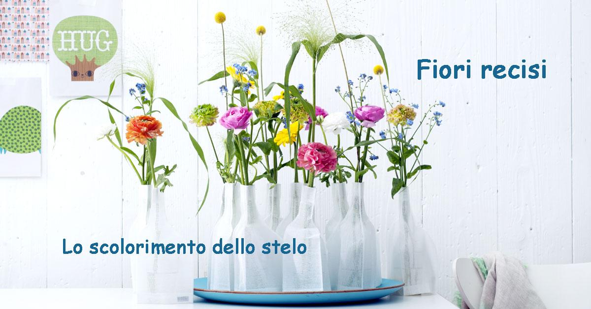 Scolorimento dello stelo nei fiori recisi