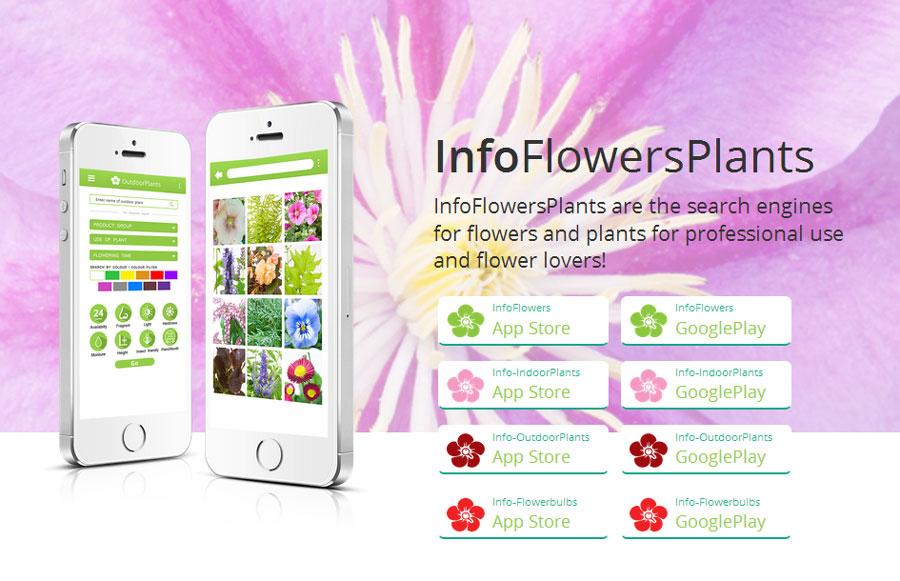 infoflowers