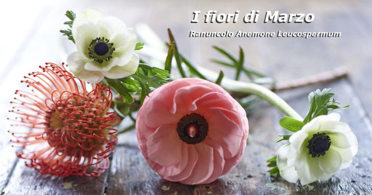 Fiori di Marzo Ranuncolo Anemone Leucospermum